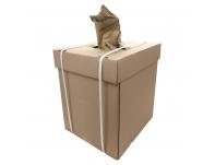Kraft vyniojimo popierius dėžėje-dispenseryje
